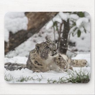 Mousepad Leopardo de neve curioso na neve