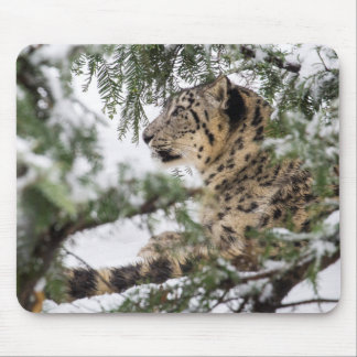 Mousepad Leopardo de neve sob Bush nevado