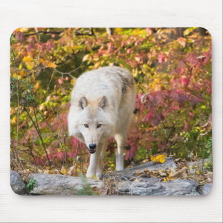 Mousepad Lobo do outono