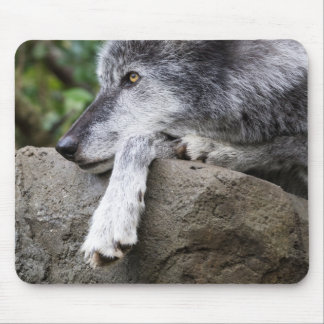Mousepad Lobo preto de relaxamento