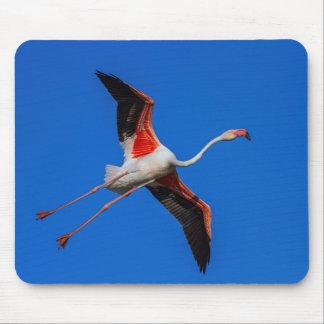 Mousepad Maior flamingo, roseus do phoenicopterus