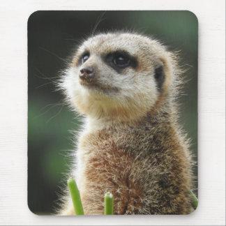 Mousepad Meerkat