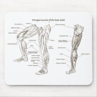 Mousepad Músculos do corpo inferior