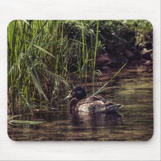 Mousepad Na borda da lagoa
