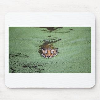 Mousepad Natação do tigre de Bengal