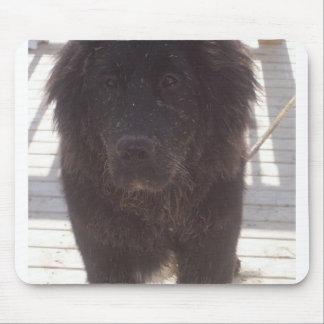 Mousepad Newfoundland_puppy_muddy