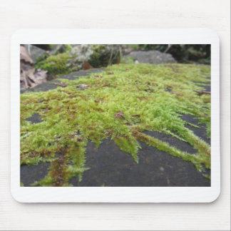 Mousepad O musgo verde no detalhe da natureza de musgo