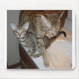 Mousepad ocicat Tawny_kitten_with_cinnamon_mother
