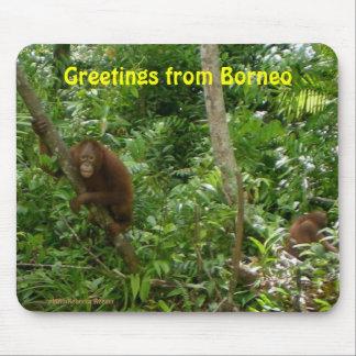 Mousepad Orangotango em Bornéu