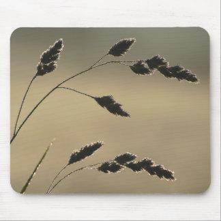 Mousepad Orelha molhada da grama