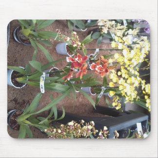 Mousepad Orquídeas para a venda