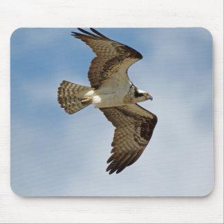 Mousepad Osprey em vôo