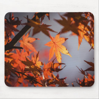 Mousepad País das maravilhas da queda da cor do outono