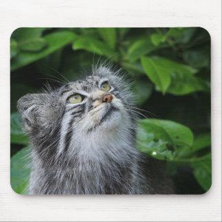 Mousepad pallas-gato