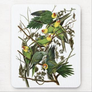 Mousepad Parakeets de Carolina de Audubon