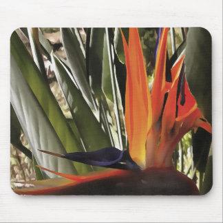 Mousepad Pássaro de paraíso (Strelitzia)