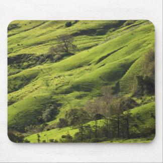 Mousepad Pastos mais verdes em Sur grande CA