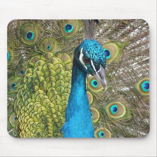 Mousepad - pavão