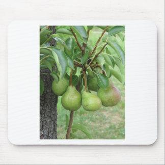 Mousepad Peras verdes que penduram em uma árvore de pera