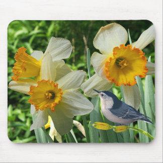 Mousepad Pica-pau-cinzento com Daffodils do primavera -