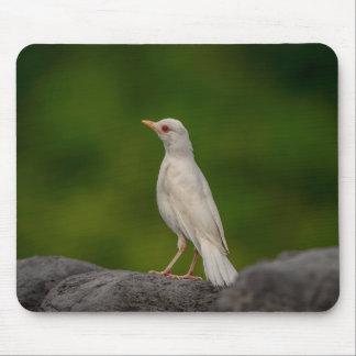 Mousepad Pisco de peito vermelho do albino no ponto da