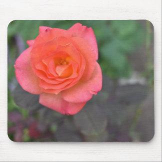 Mousepad Planta cor-de-rosa da flor da fotografia da