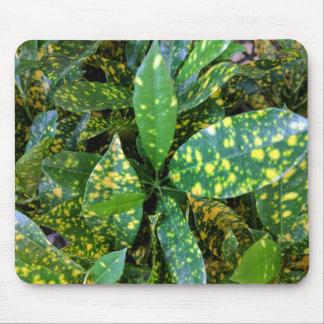 Mousepad Planta do Croton