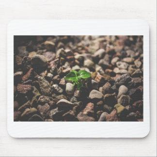 Mousepad Planta frondosa verde que começa crescer em