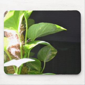 Mousepad Pothos dourado na luz solar