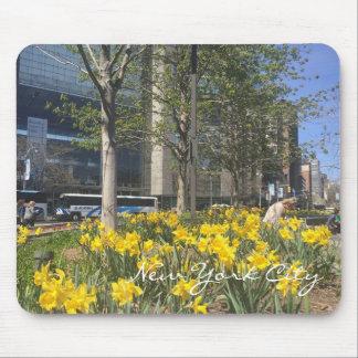 Mousepad Primavera do círculo NYC de Columbo dos Daffodils