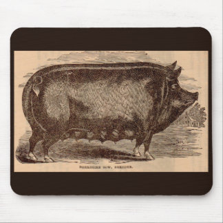 Mousepad Raça do século XIX da porca de Berkshire do