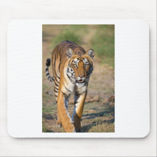 Mousepad Rapina de desengaço do Tigress fêmea
