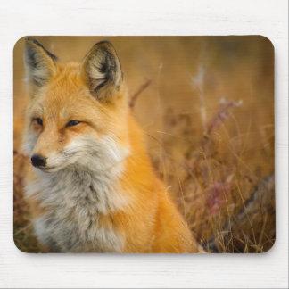 Mousepad raposa