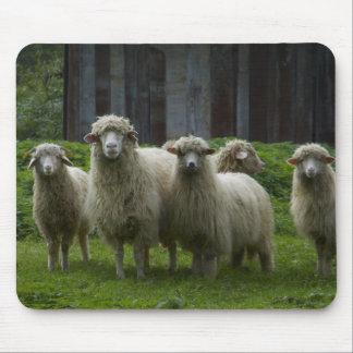 Mousepad Rebanho da terra dos carneiros |