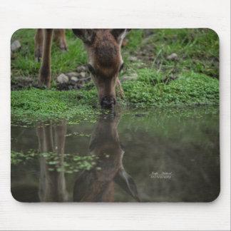 Mousepad Reflexão da jovem corça na água