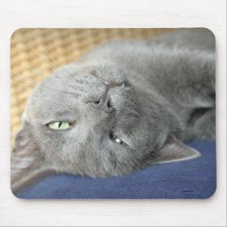 Mousepad Relaxe! Tapete do rato de ronrom cinzento do gato