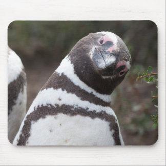 Mousepad Retrato do pinguim de Magellanic