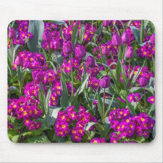 Mousepad roxo das tulipas e das prímulas