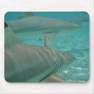 Mousepad shark