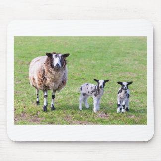Mousepad Sira de mãe a carneiros com os dois cordeiros