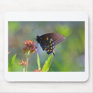Mousepad Spicebush Swallowtail II