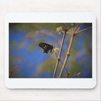 Mousepad Spicebush Swallowtail mim