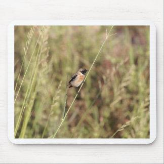Mousepad Stonechat comum (torquatus do Saxicola)