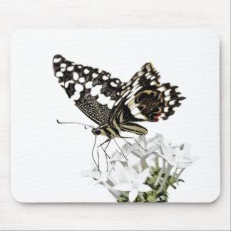 Mousepad Swallowtail empoleirou-se no branco