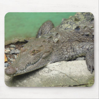 Mousepad tapete de ratos crocodilo