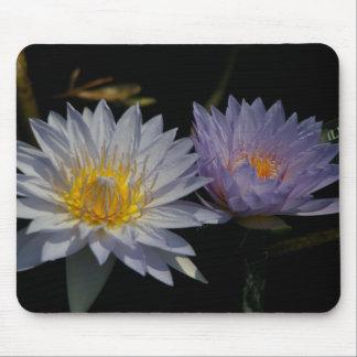 Mousepad Tapete do rato branco & roxo de Lotus Waterlily