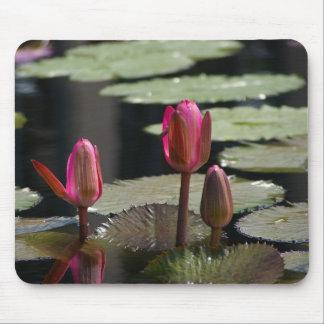 Mousepad Tapete do rato cor-de-rosa de Lotus Waterlilies