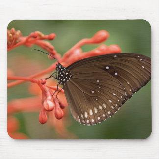 Mousepad Tapete do rato da borboleta