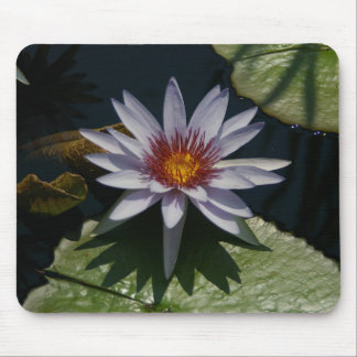Mousepad Tapete do rato das almofadas de lírio de Lotus