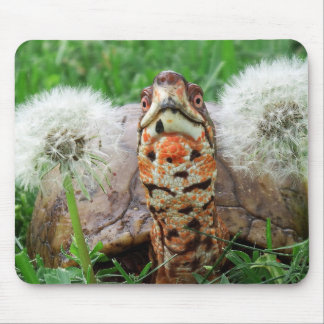Mousepad Tartaruga de caixa colorida